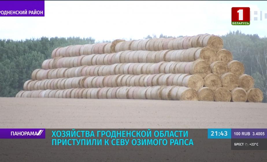 Гродненская область по-прежнему удерживает лидерство по урожайности зерновых