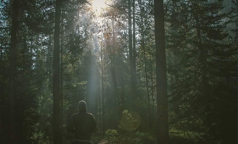 Как не заблудиться в лесу: советы спасателей