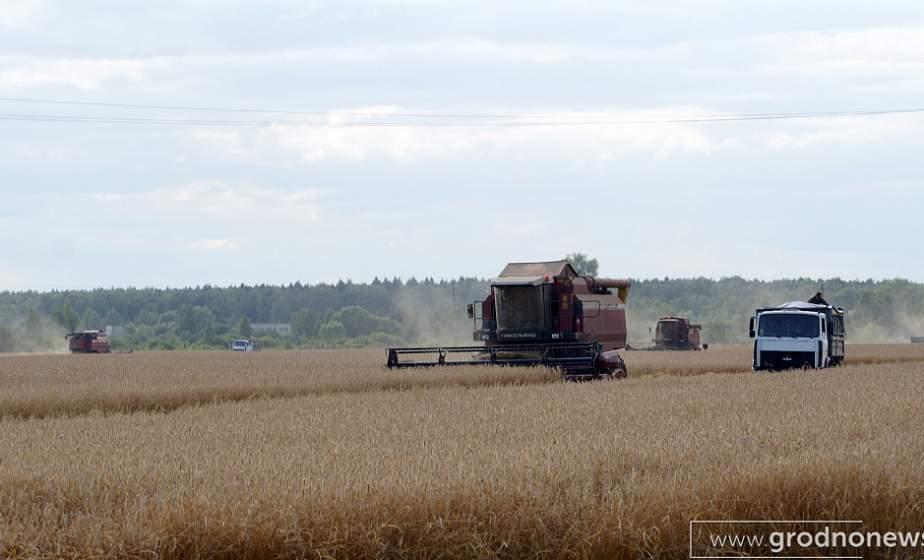 Сахарная свекла, кукуруза и картофель. Какие культуры уже убраны в регионе?