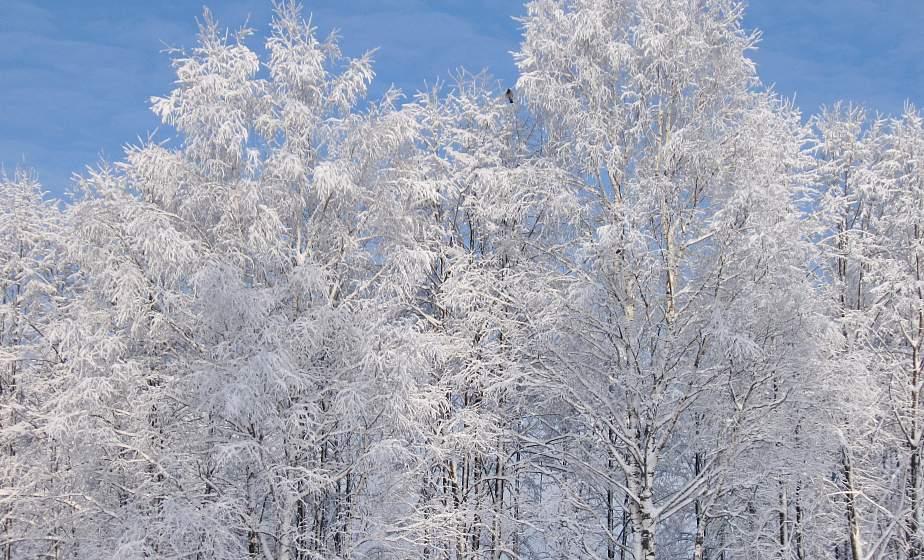 Будет очень холодно. К концу недели ожидаются морозы до -29°С