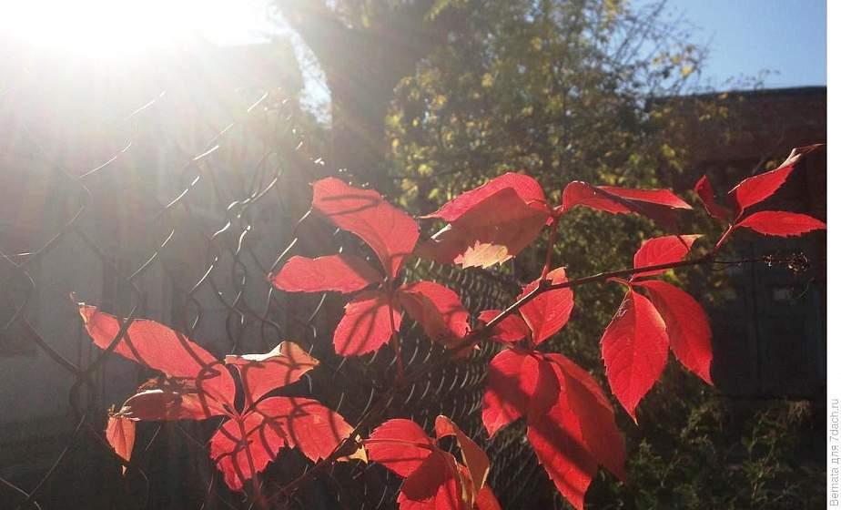 Ноябрь в этом году в Беларуси ожидается теплее обычного