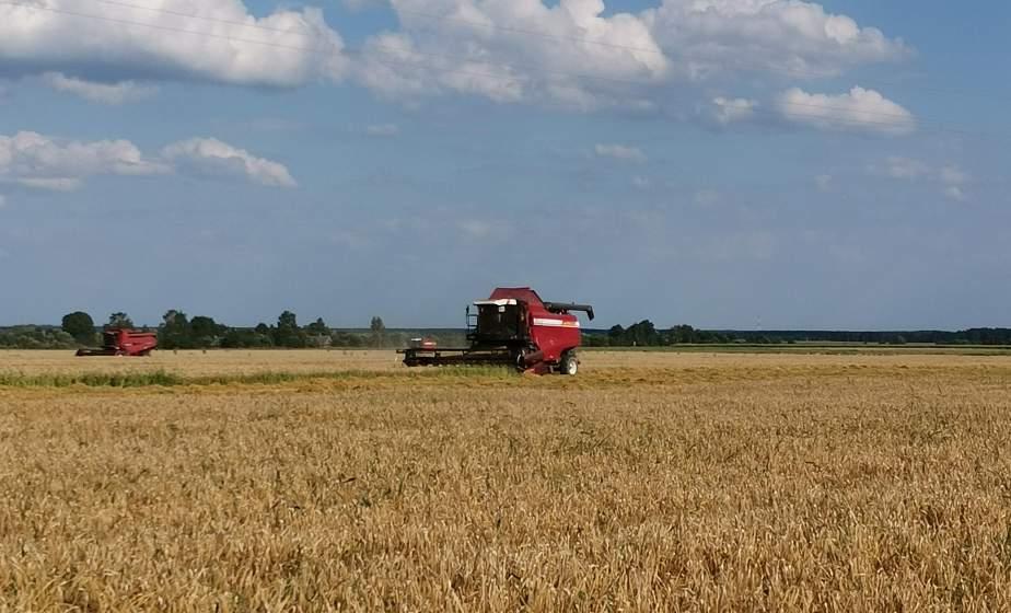 Урожайная нива, жаркая страда. Как от зари до зари хлеборобы Щучинщины убирают урожай, в репортаже корреспондента «ГП»