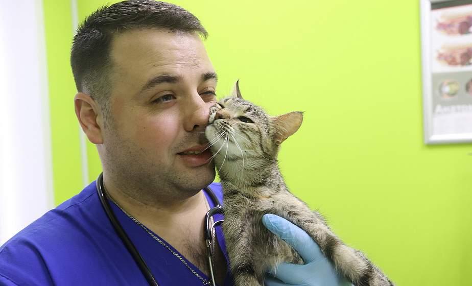В Лиде проводят уникальную операцию по протезированию передних лап у кошки