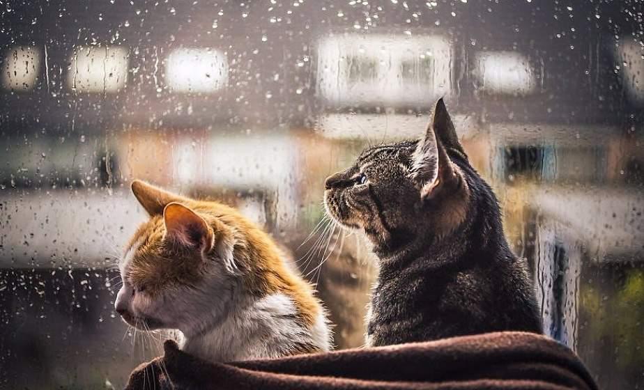Дожди и очень тепло. Какой будет погода 1 февраля?