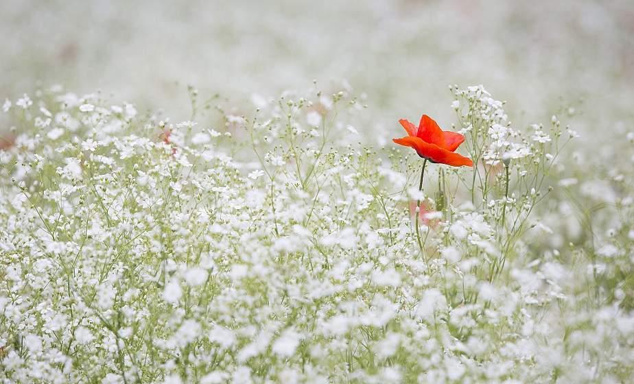За лекарственными травами необязательно ехать в поля. Рассказываем о полевых растениях, которые можно вырастить в любом огороде