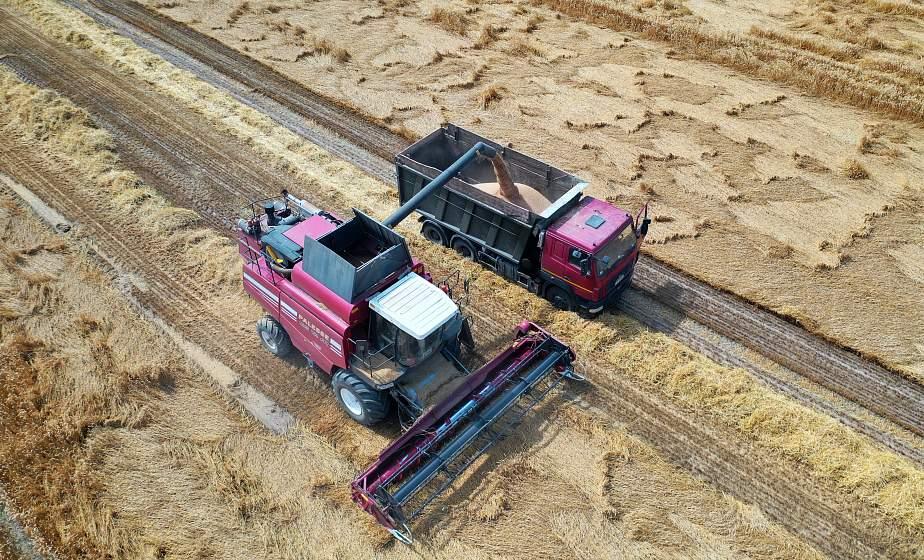 «Приятно осознавать, что в весомом каравае Гродненщины есть зерно твоего труда». Блиц-интервью с аграриями региона