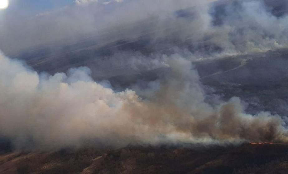 Из-за пожароопасной ситуации в Беларуси введены первые ограничения на посещение лесов