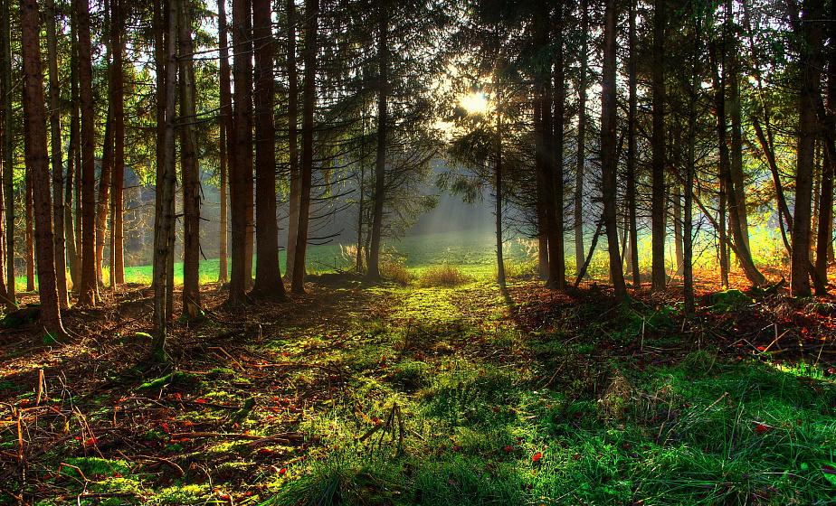 В Беларуси начали снимать запреты на посещение лесов