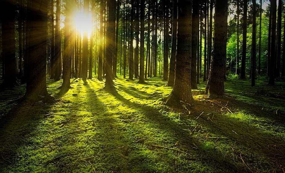 Запрет на посещение лесов снят в Гродненской области