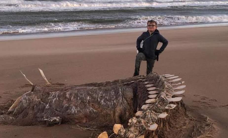 Роковой шторм. Скелет неопознанного существа вынесло на берег