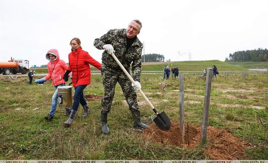 В Беларуси за год высадят около 500 тысяч деревьев и 350 тысяч кустарников