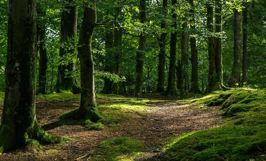 На территории Вороновского района введен запрет на посещение лесов
