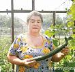Жительница поселка под Волковыском вырастила 42-сантиметровый огурец. Посмотрите, какой большой