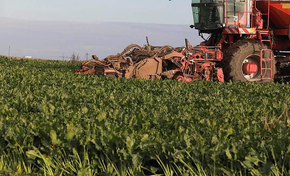 В Беларуси осталось убрать менее 6% площадей овощей