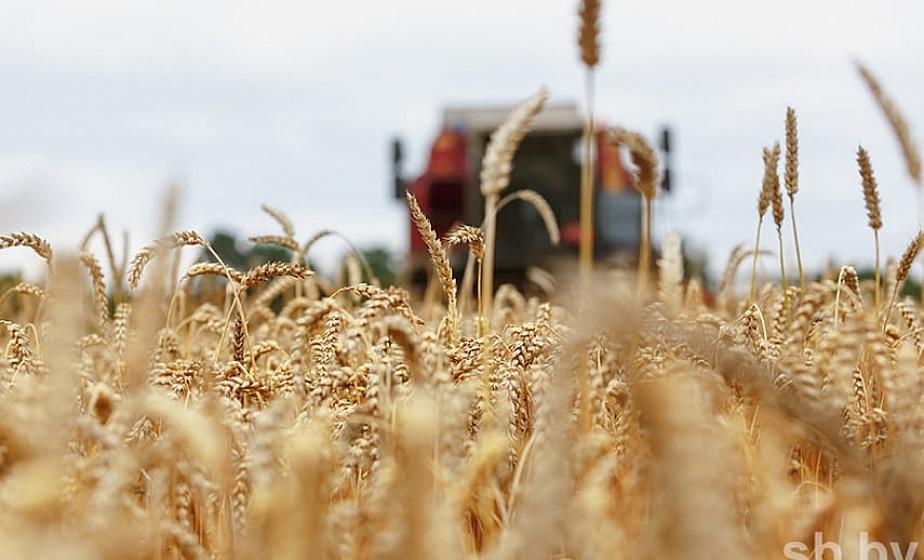 Белорусским аграриям осталось убрать чуть более 7% площадей