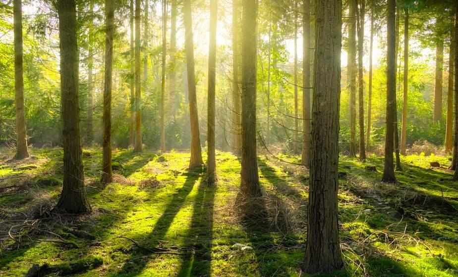Запреты и ограничения на посещение лесов действуют в 79 районах Беларуси