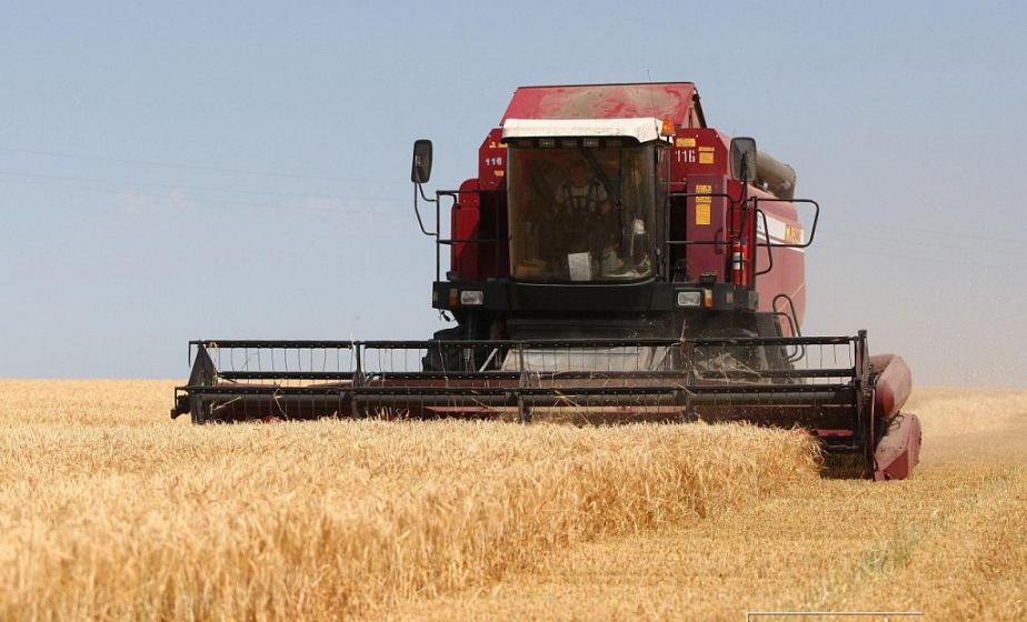 Аграрии планируют собрать в этом году около 7,6 млн т зерна