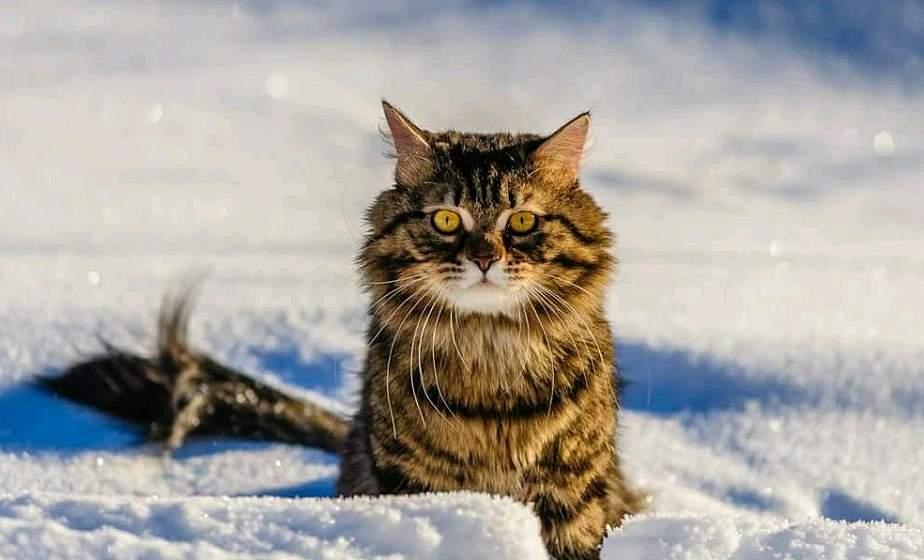 Мокрый снег и до -6°С ожидается в Беларуси 30 ноября