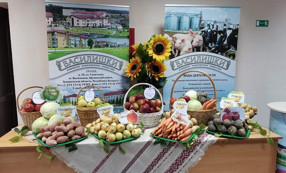 В этом году белорусские аграрии планируют получить не менее 5,8 миллиона тонн картофеля и 1,8 миллиона тонн овощей