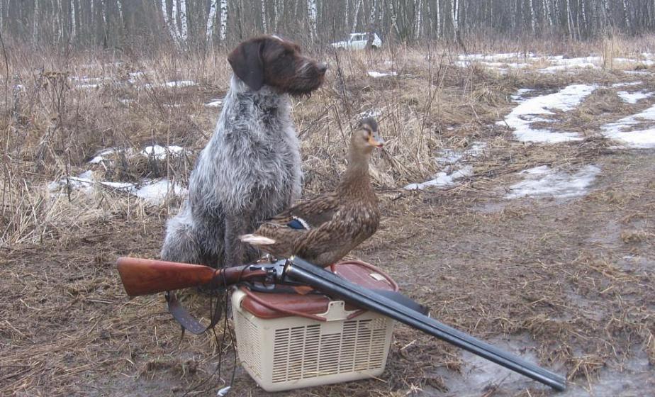 13 марта открывается весенний сезон охоты на пернатую дичь
