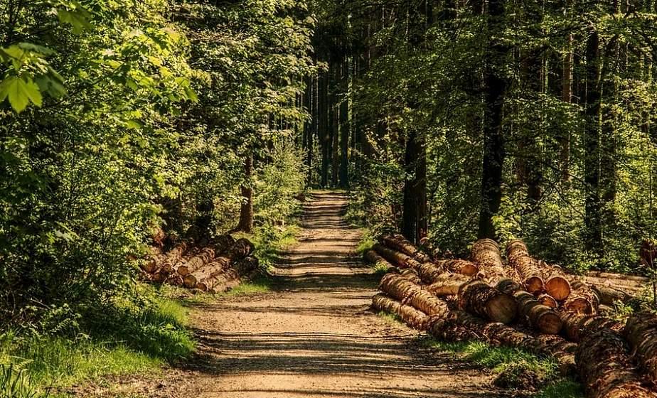 Запреты и ограничения на посещение лесов действуют в четырех районах Беларуси