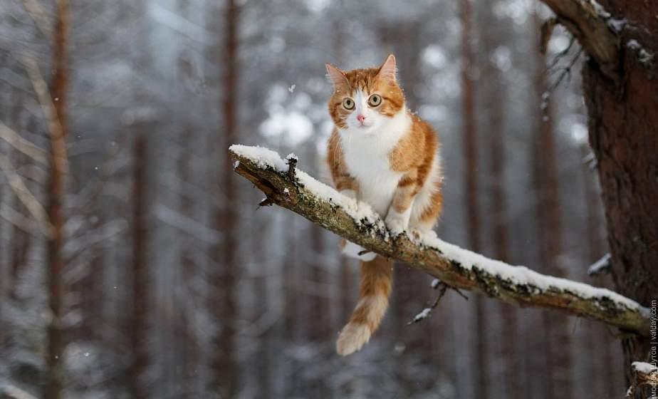 Мокрый снег и гололедица. Какой будет погода 14 декабря?