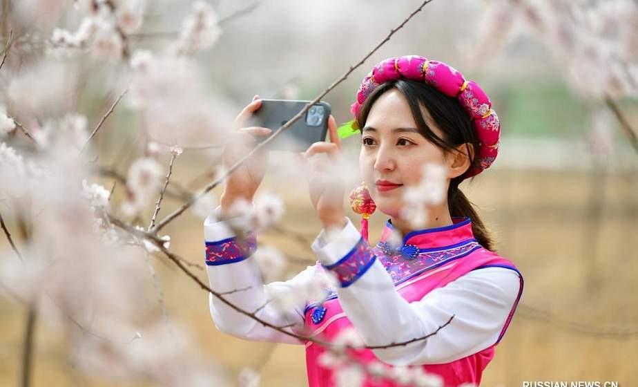 Фотофакт. Благоухающие абрикосовые сады в китайской провинции Ганьсу