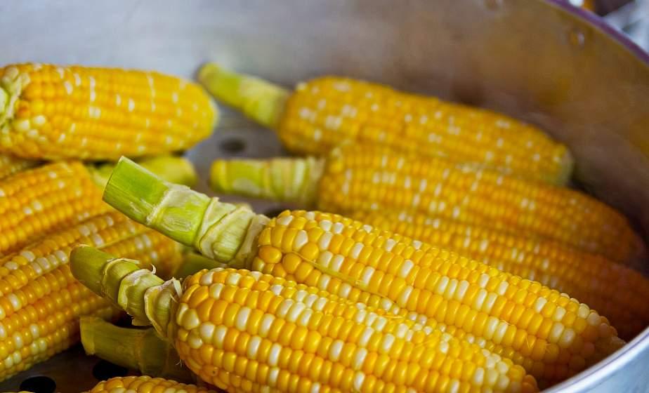 Источник витаминов и антиоксидантов. Кому можно и нельзя добавлять в рацион кукурузу
