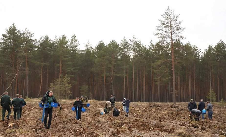 650 новых гектаров. На Гродненщине подвели итоги республиканской акции «Неделя леса − 2021»