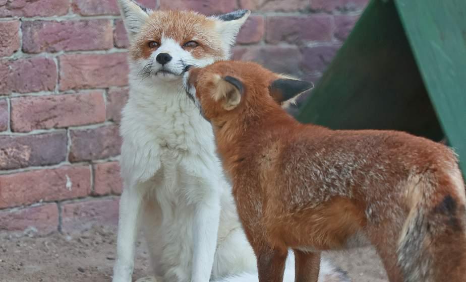 Фотофакт: обитатели Гродненского зоопарка наслаждаются последними теплыми днями бабьего лета