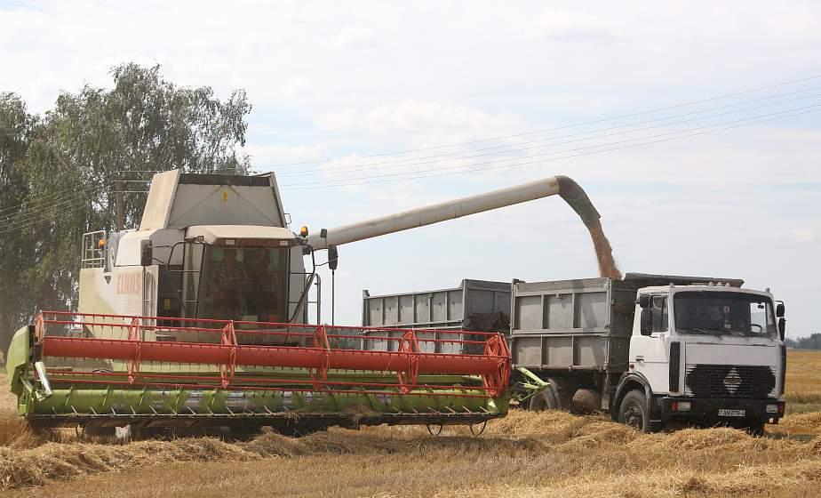 Уборку зерновых в Беларуси планируют завершить за две недели