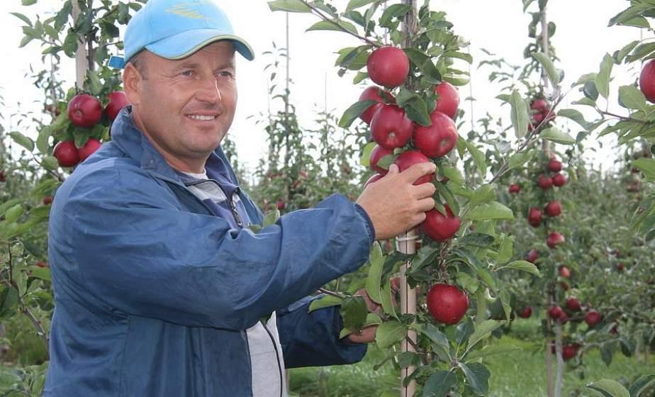 Яблочный сезон: отличный урожай вырастили в этом году садоводы Гродненского зонального института растениеводства