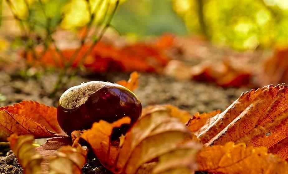 Листобой, зимник, свадебник – народные традиции и приметы октября