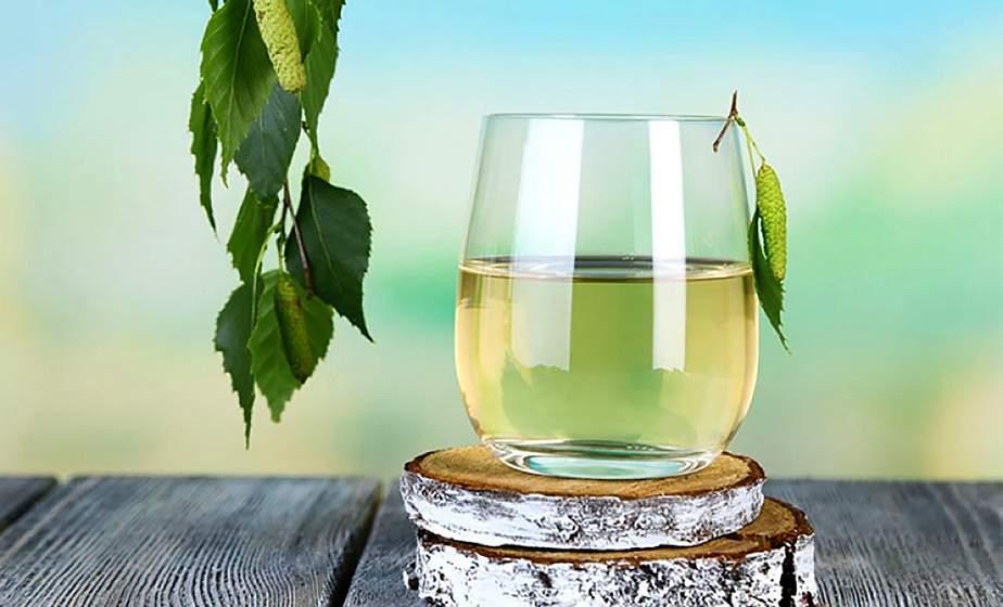 Как правильно собирать березовый сок? Пошаговый ликбез