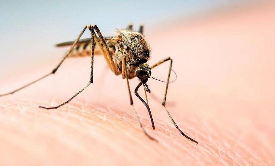 Стала известна группа крови самая вкусная для комаров