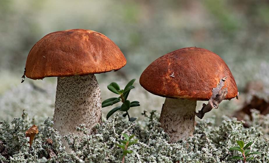 Опасный грибной сезон. Почему не стоит покупать закатки с рук и где лучше заниматься «тихой охотой»
