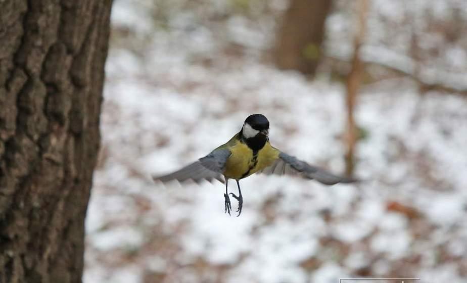 Снег и до -8°С ожидается в Беларуси 13 января