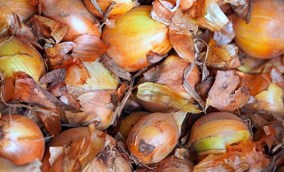 Как сажать лук осенью: правила температуры, почвы и схемы