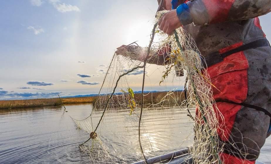 До 45 базовых за рыбину: рыбакам напомнили об ответственности за незаконный улов