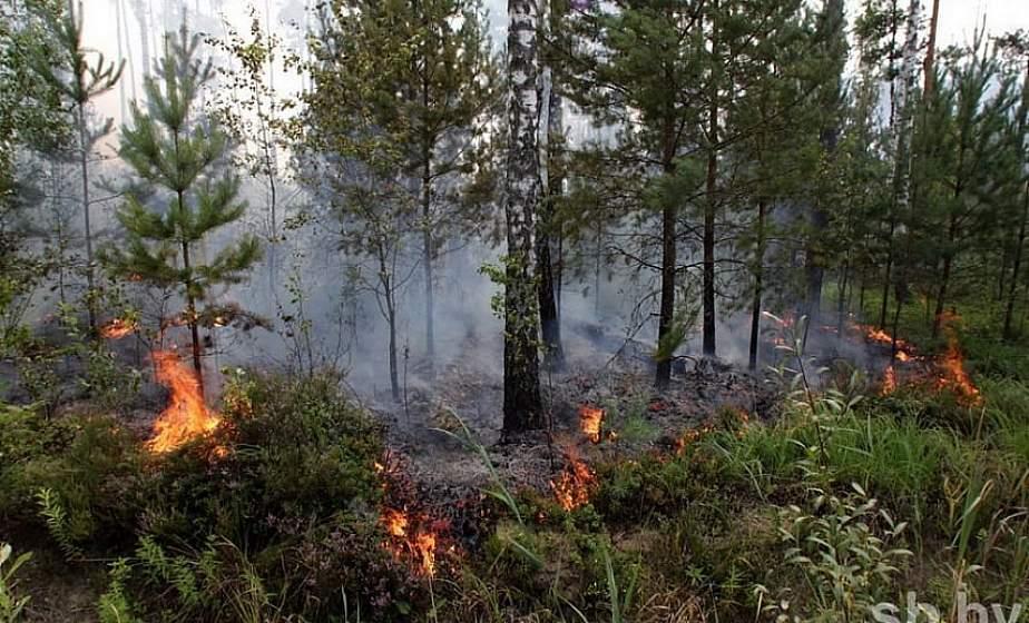 Практически на всей территории страны установлен 1-й класс пожароопасности