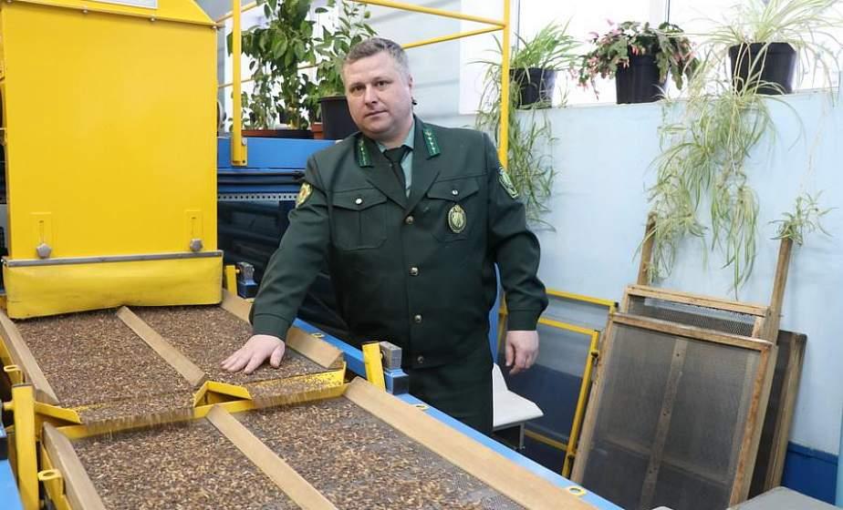 Как в Щучинском лесхозе перерабатывают шишки ели
