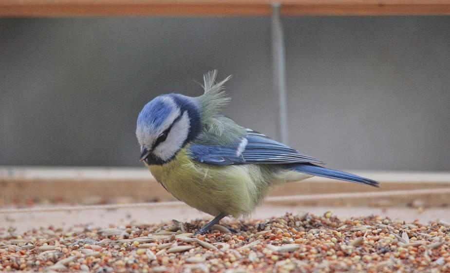 Отправиться на фотоохоту за птицами предлагают всем желающим 20 февраля