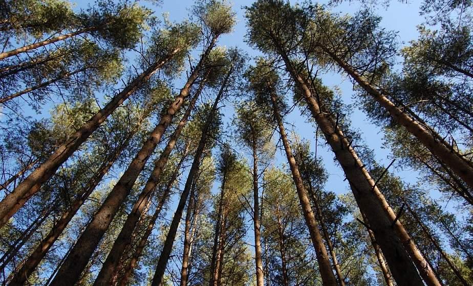 В Гродненской области снят запрет на посещение лесов
