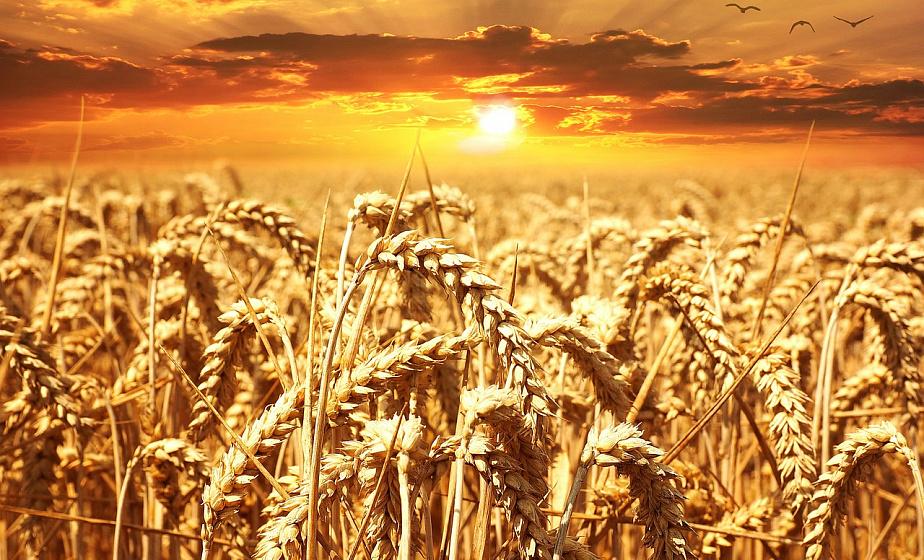 На утро 2 августа хлеборобы области собрали 815 222 тонны зерна