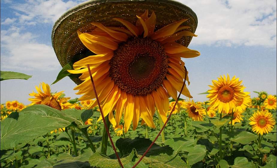 Дню, лето июль картинки прикольные