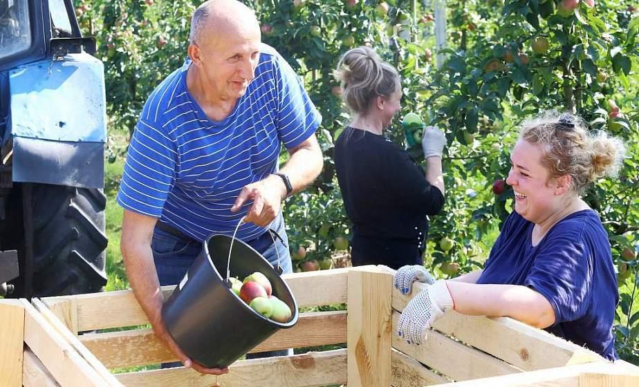 От моркови до яблок. В стабфонды области планируется заложить более 6000 тонн плодоовощной продукции