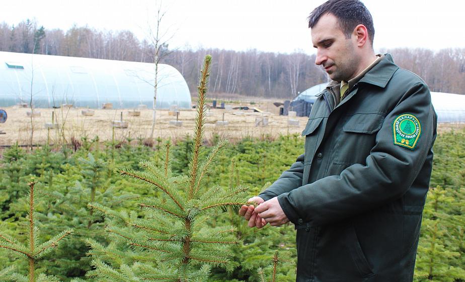 4,5 миллиона деревьев. Как в лесных питомниках области готовят саженцы к «Неделе леса-2019»