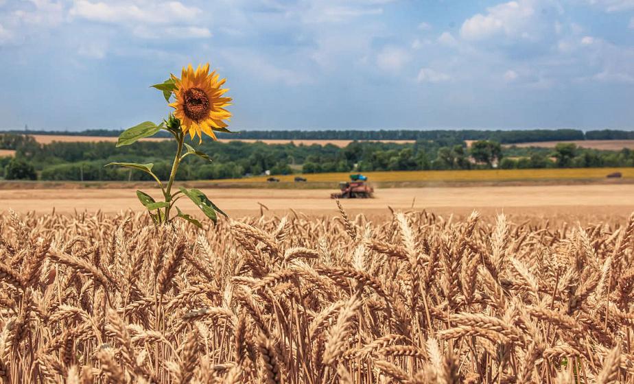 Хлеборобы Гродненщины намолотили 1069 тысяч тонн зерна