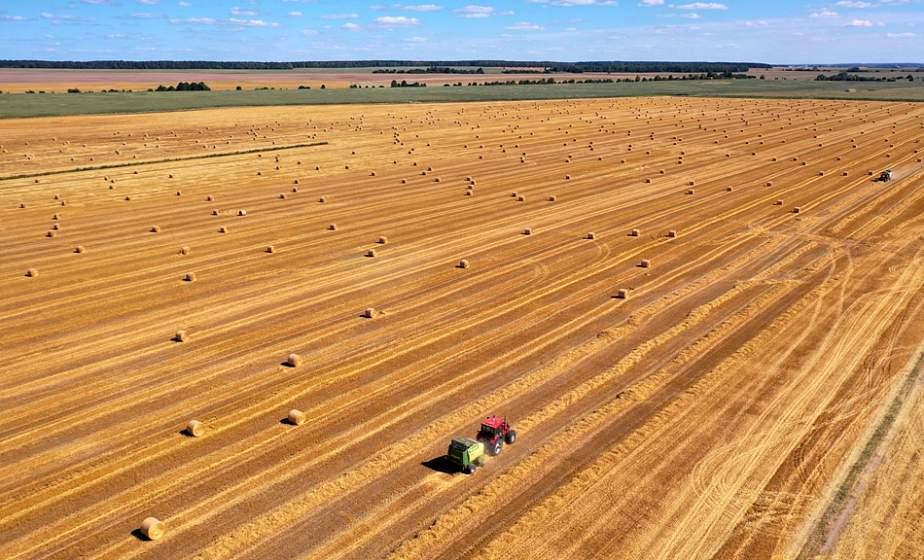 В ЗАО «Гудевичи» Мостовского района прошли «Дажынкі». Аграрии гордятся результатом: урожайность зерновых свыше 60 ц/га