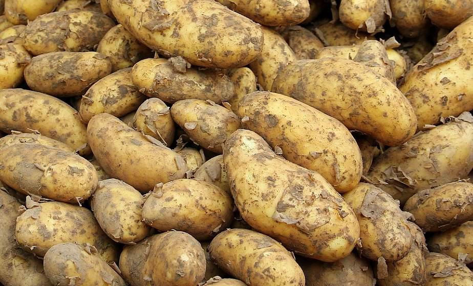 Секреты богатого урожая: как ухаживать за картофелем в августе